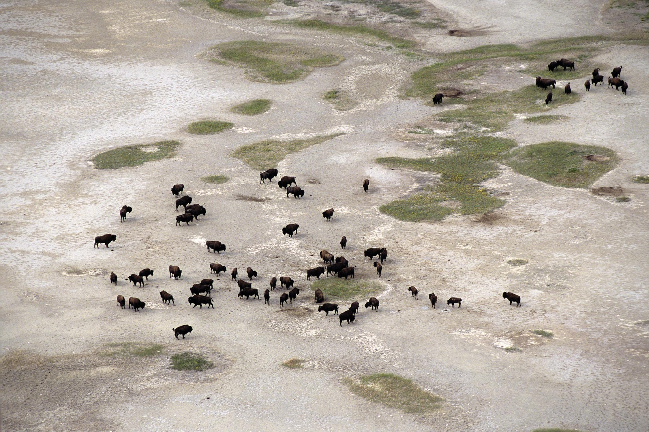 Wood Buffalo, Salt Plains