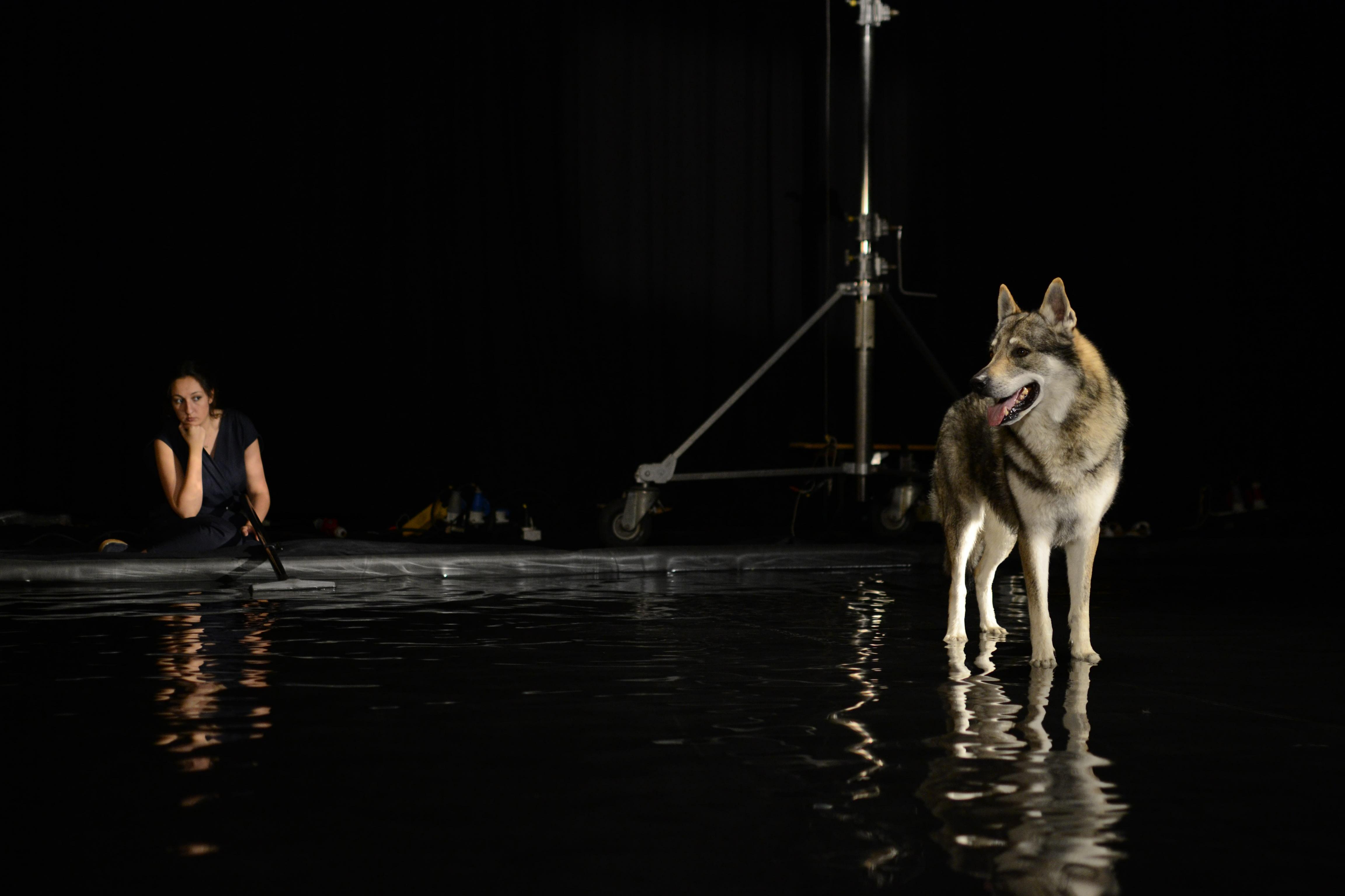 Wolves on set