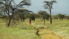 Locust Outbreak in Kenya