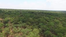 Global Forest Resources Assessment (FRA) 2020 VNR